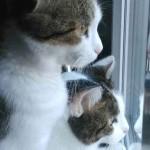 deux chat blanc