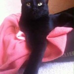noir chat