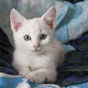 nom pour chaton en M