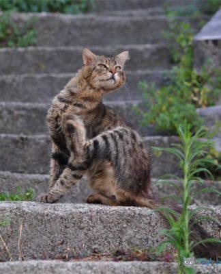 gale chez le chat