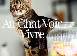 Au Chat Voir Vivre Cafe Chat Lille Nord 59
