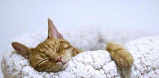 pourquoi-chat-dorment-beaucoup