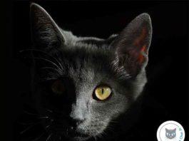 pourquoi-chat-voit-dans-noir